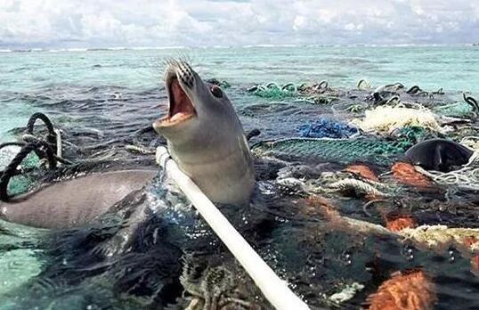 被塑料垃圾包围的海洋动物 图据网络