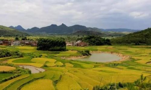 农村生态环境与生态农业经济的关联性