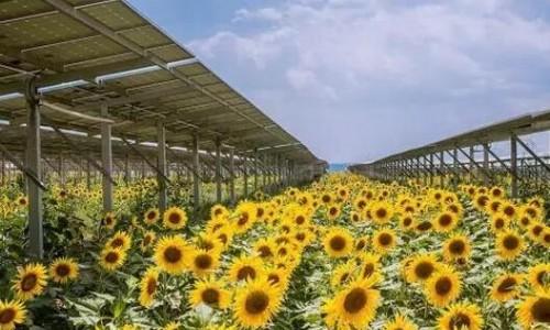 法国720MW光伏项目招标完成 未来还有850MW!