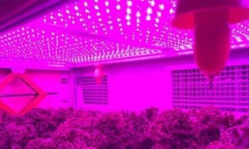 """用电促进植物生长?港媒称""""带电栽培""""助力中国新农业革命"""