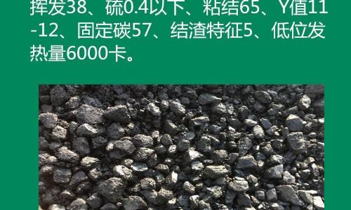 山东气煤下调50-60元