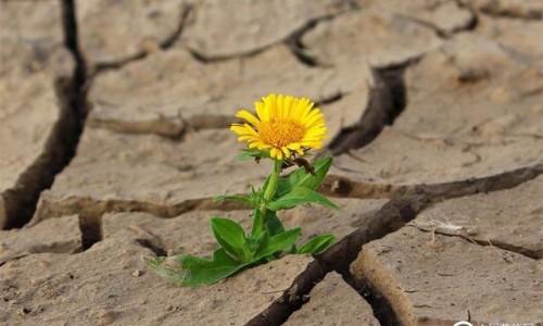 物联网和干旱敏感农业:水资源监测和环境管理解决方案