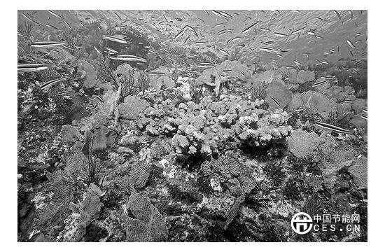 从监狱到自然保护区 科学家呼吁保护海岛及周边地区生物多样性