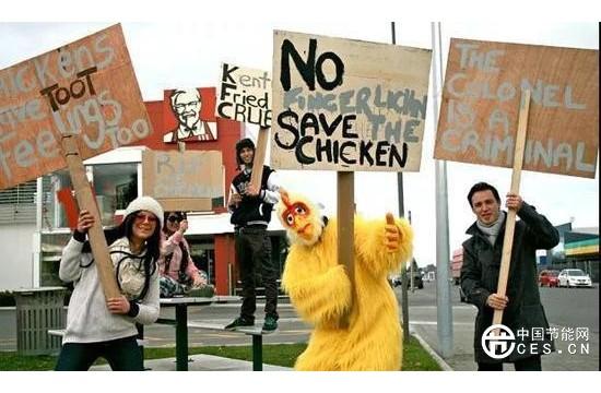 """新西兰爆发""""鸡蛋荒"""" 原因竟是环保组织抗议笼养鸡"""
