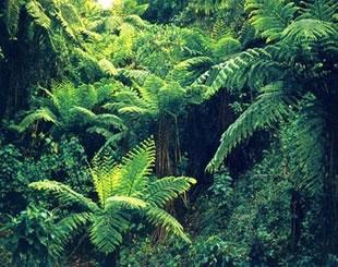 浅析植物保护工作中存在的问题及具体对策