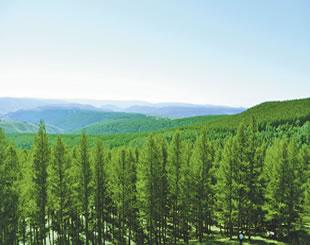 森林健康状况与改进策略