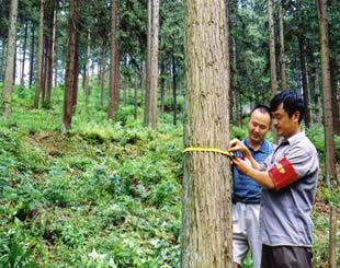 关于森林管护措施的分析