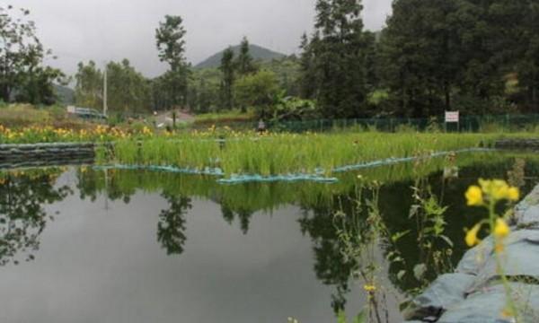 农村污水处理的现状与净化槽技术实践
