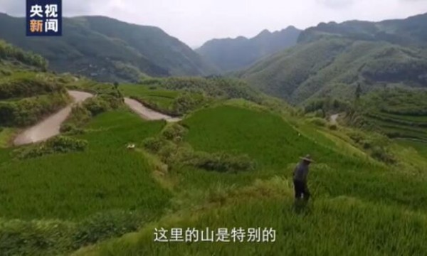 """时政微视频丨""""绿水青山""""十五年"""