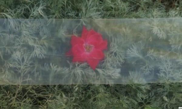 科学家研制出节能透明木材:隔热更强,可替代窗户玻璃