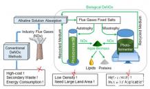 能源微藻在用于工业烟气生物脱硝研究中取得进展